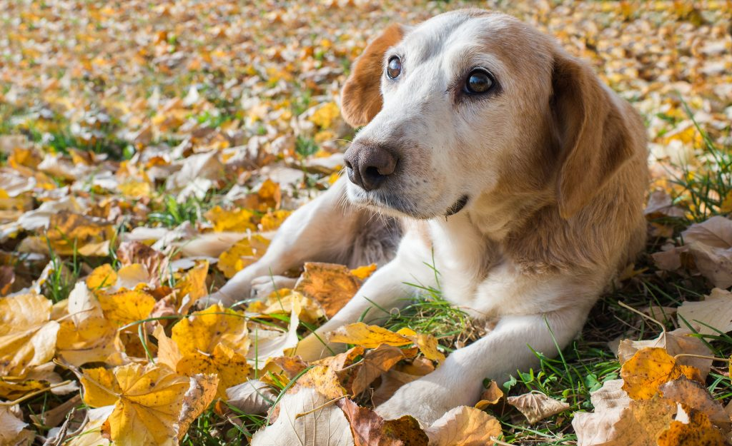 dog on leaf