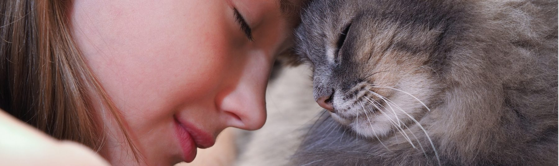 senior-cat-care