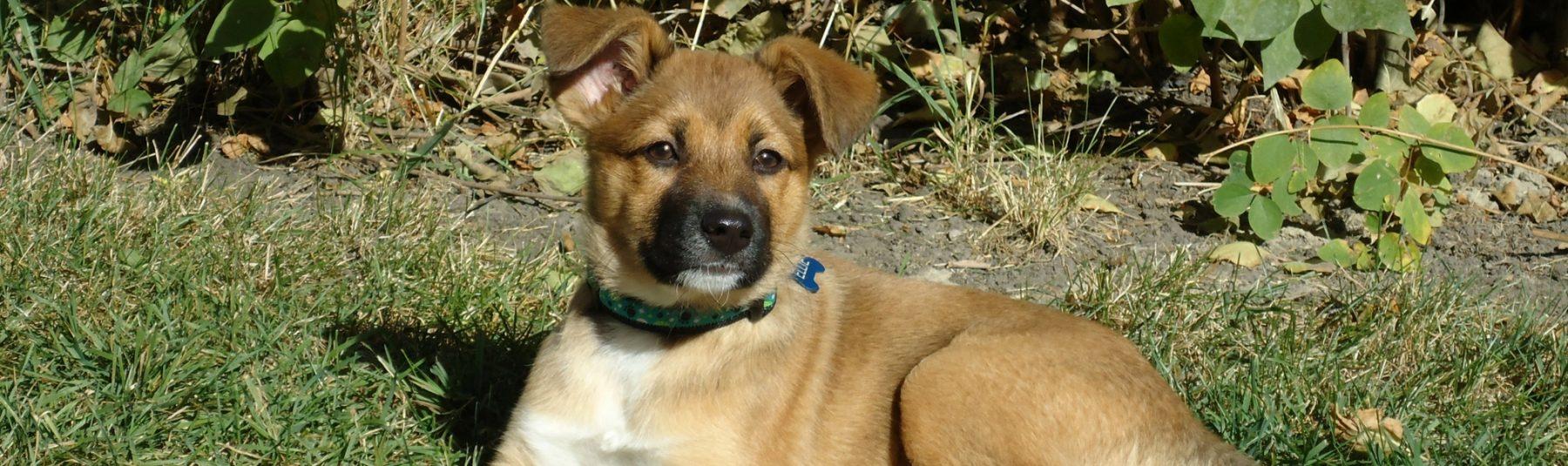 puppy-spay