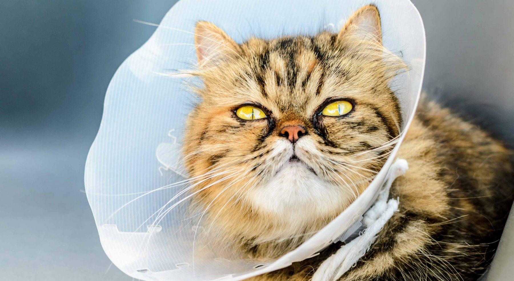 cat-surgery