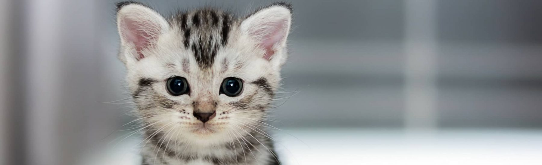 cat_general