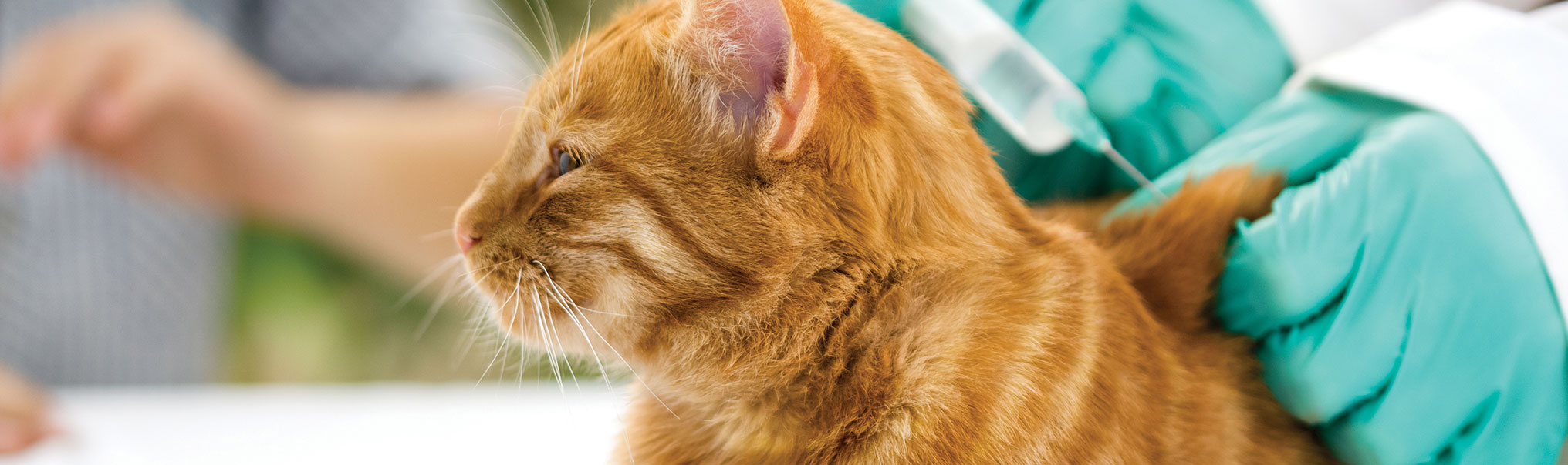 Fvrcp And Core Vaccine For Cats Lomsnes Veterinary Hospital
