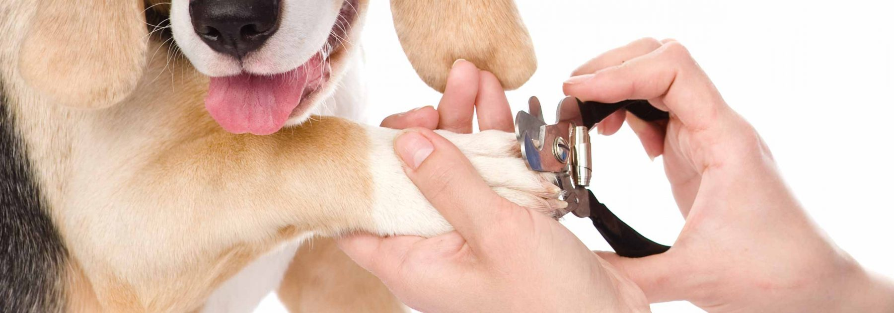 dog-nail-trims