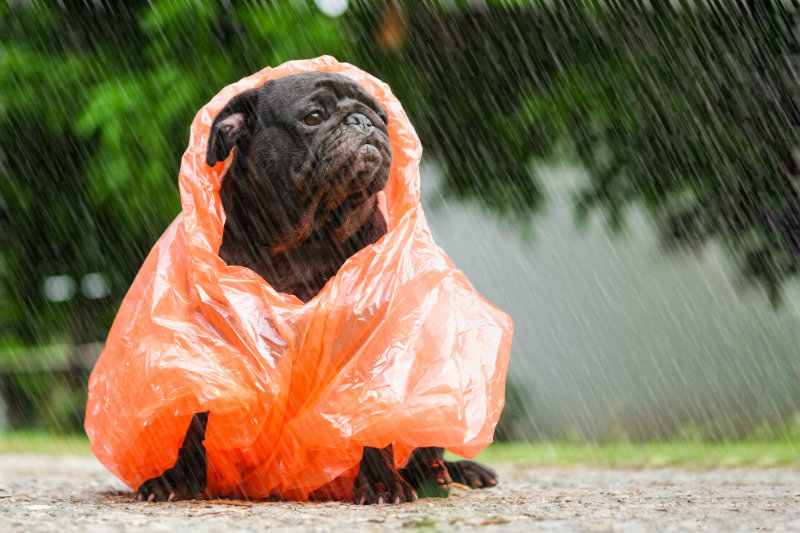 Keeping Your Pet Safe During A Storm Lomsnes Veterinary