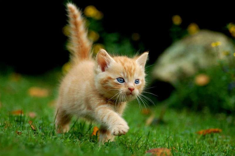 Tips for New Kitten Owners
