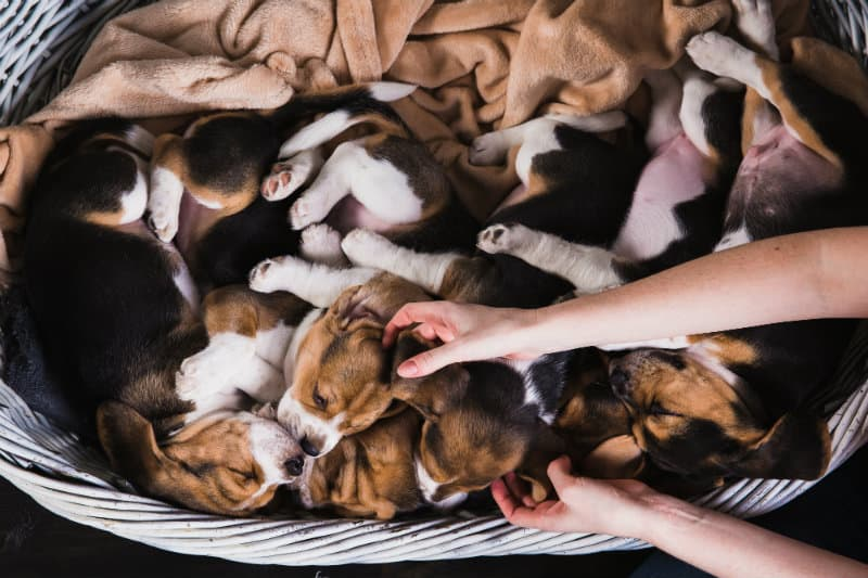 Questions To Ask Prior to Adoption - Lomsnes Veterinary Hospital